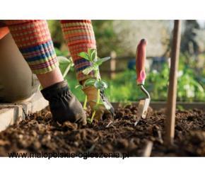 Sadzenie warzyw od zaraz !!!